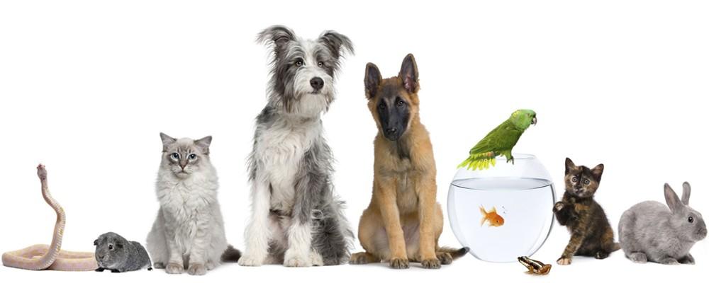 зоомагазин товары для животных