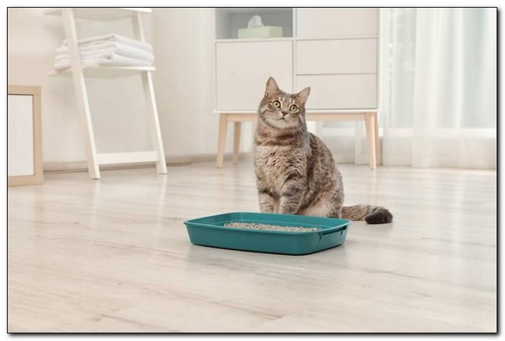 как выбрать идеальный наполнитель для кошки