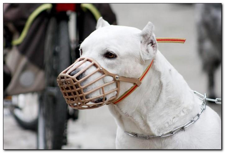 список собак для выгула в наморднике
