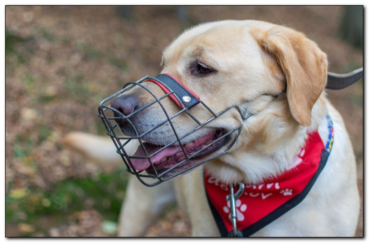 как надеть намордник на собаку