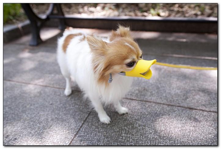 силиконовый намордник для собаки