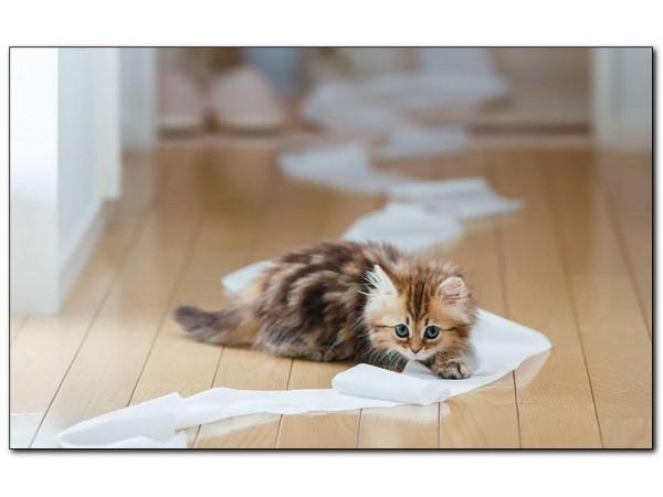 Кошачьи наполнители: какие бывают и как правильно выбрать?