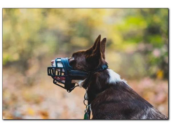 Намордники для собак: как правильно выбрать?