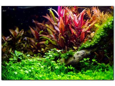 Неприхотливые растения для аквариума: виды и особенности
