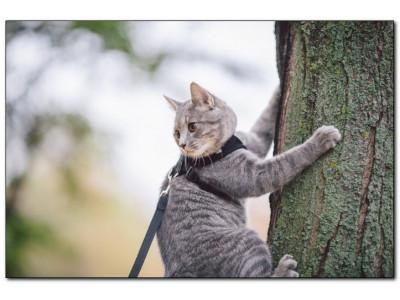 Стоит ли выгуливать кошку: собираем амуницию для выхода на улицу