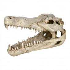 Декоративный Череп крокодила 14см