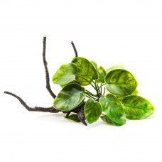 Растение на корне пластик В2001 23х16х14см