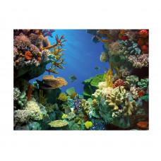 Фон для аквариума Tetra Shark&Coral
