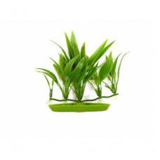 Пластиковое растение CRYPT BECKETTI 12см