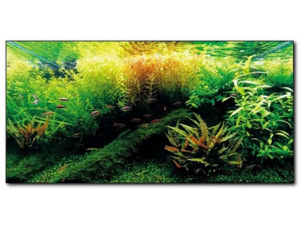 Как победить водоросли в аквариуме