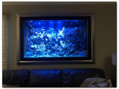 Какой аквариум лучше выбрать