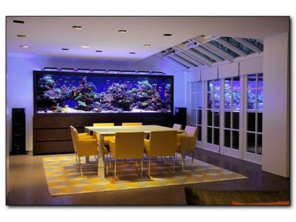 Настенный аквариум (аквариум-картина) - виды и особенности