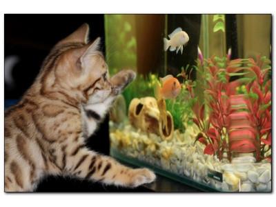Выбор аквариума для начинающих