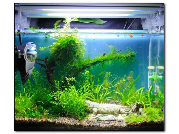 Как подобрать фильтр для аквариума?