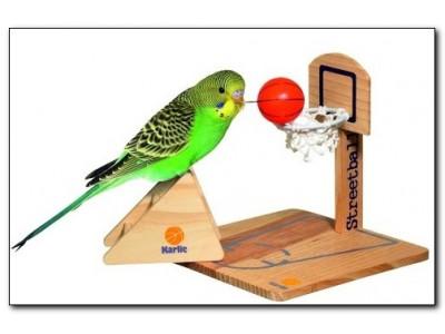 Выбираем игрушку для волнистого попугая