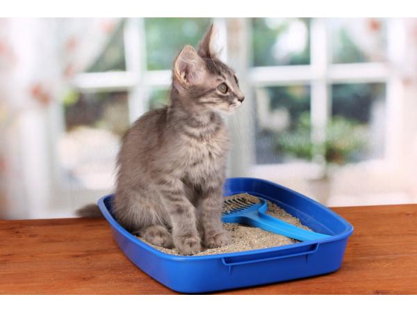 Как приучить котенка к лотку?
