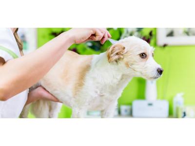 Как правильно наносить капли от клещей и блох собаке?