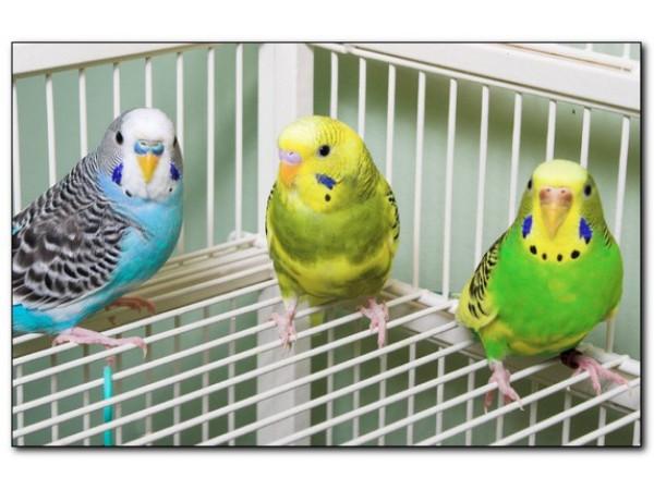 Что должно быть в клетке у попугая?