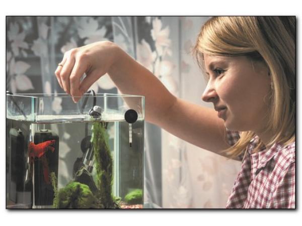 Как правильно кормить рыбок в аквариуме?
