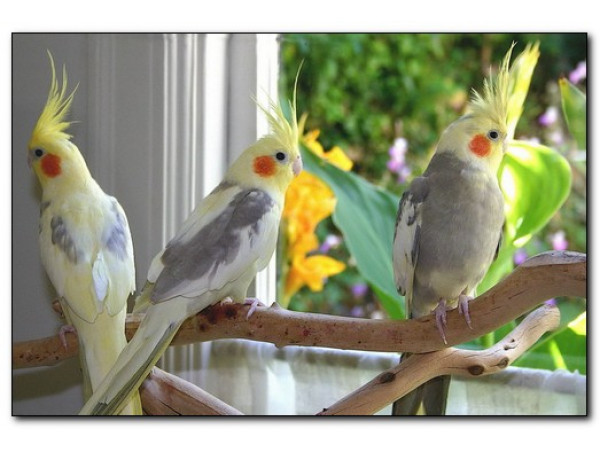 Содержание птиц в домашних условиях
