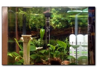 Как выбрать нагреватель для аквариума