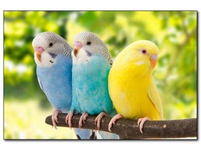 Витамины для волнистого попугая