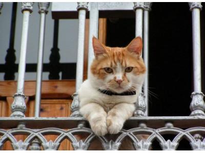 Как выбрать хороший ошейник от блох для кошки?