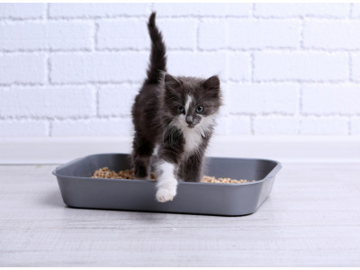 Подбираем лоток и наполнитель для кошки