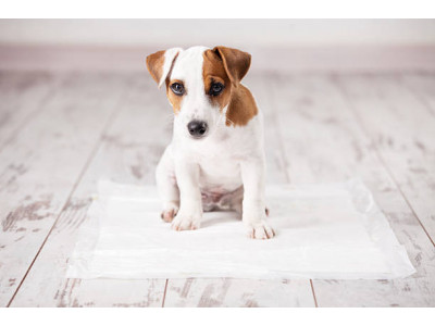Как приучить собаку ходить на пеленку?