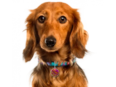 Почему адресник для собак это хорошо?