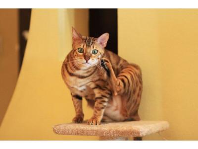 Что делать, если у кошки блохи?