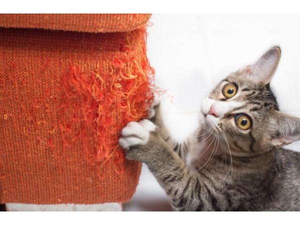Как отучить кошку драть мебель и как защитить мебель от когтей питомца?