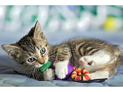Как выбрать игрушки для котенка?