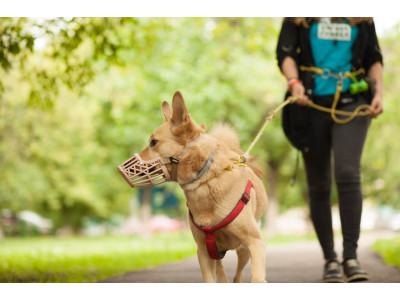 Как выгуливать собак во время карантина?