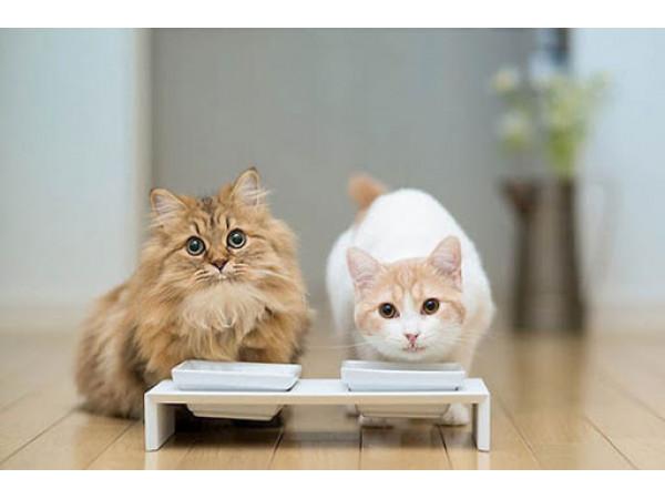 Какой корм для кошек лучше?