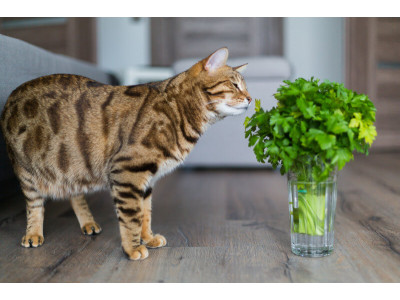 Чем кормить домашнюю кошку: советы по рациону питания?