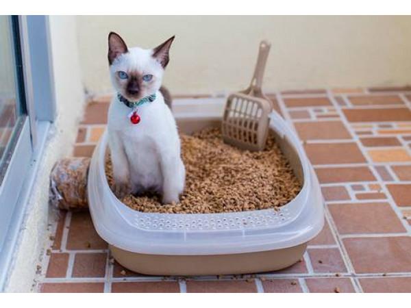 Как подобрать лоток для кошки?