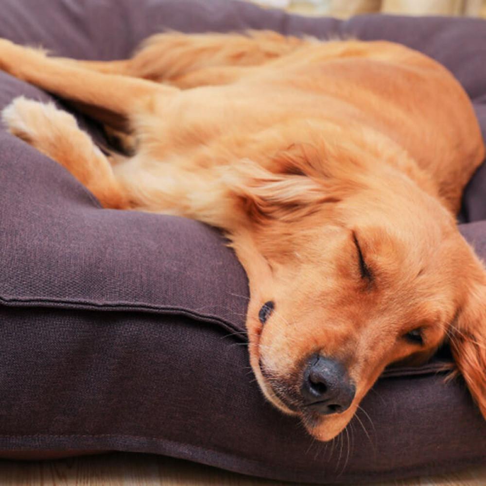 Лежак для домашних животных Hoopet HY-1881 L Коричневый