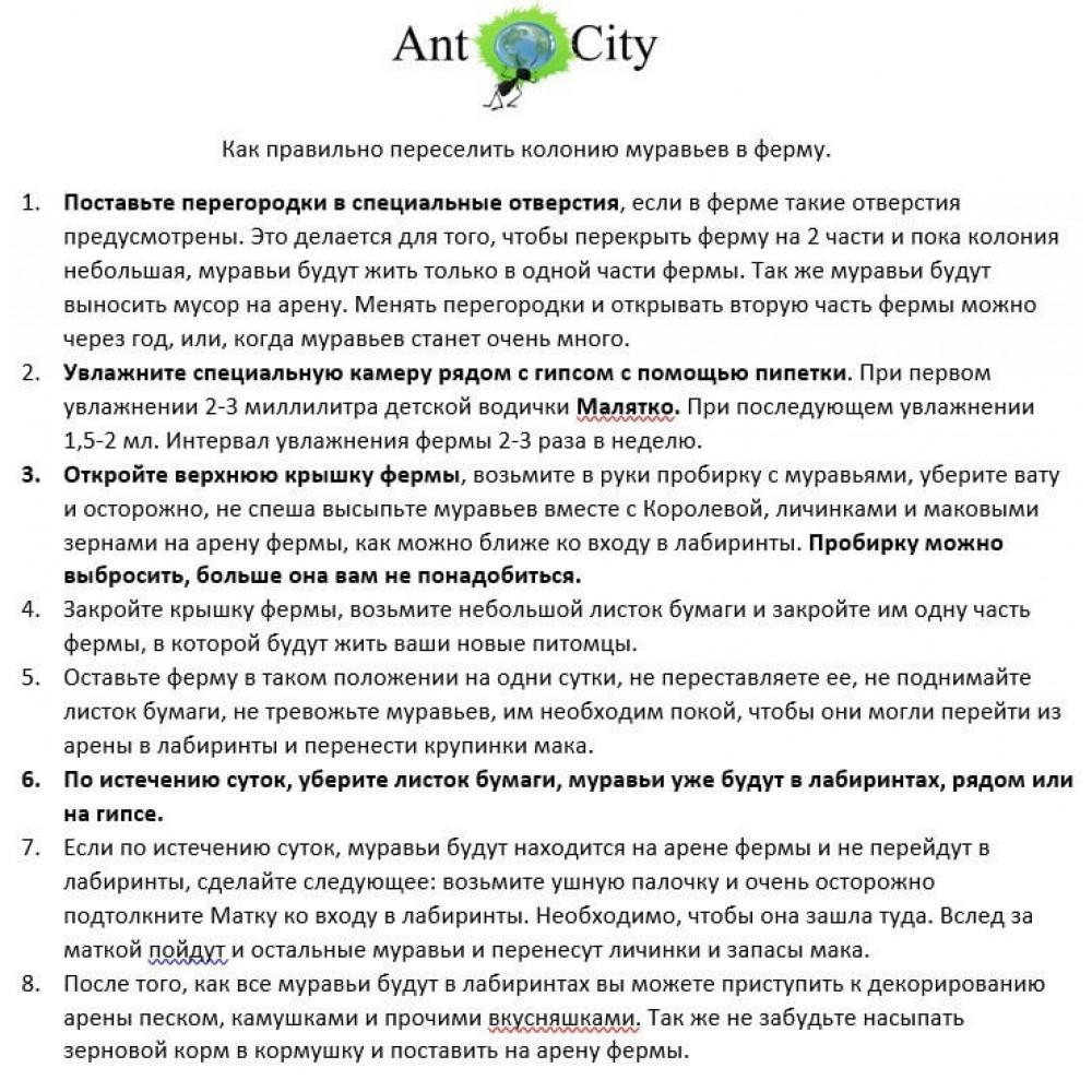 Муравьиная Ферма AntCity Лунное Созвездие комплект для новичка Синий
