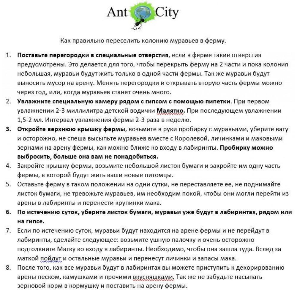 Муравьиная Ферма AntCity Планета Земля комплект для новичка Разноцветный