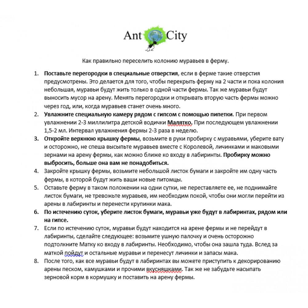 Муравьиная Ферма Ant City Smart Дерево комплект для новичка Коричневый