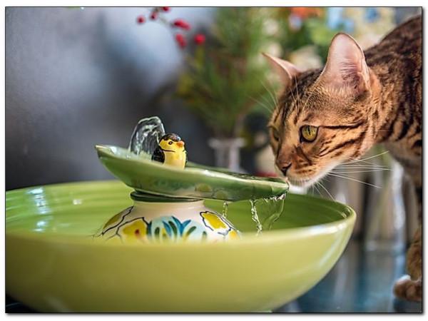 Кошачий фонтан: зачем нужен и как выбрать?