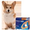 Защита от блох и клещей для собак