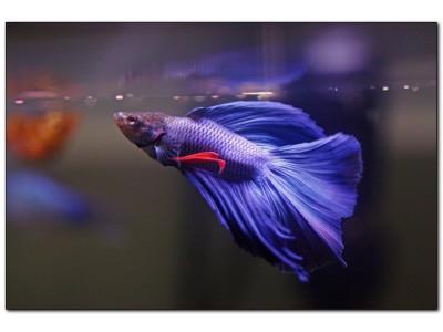 Как обустроить аквариум для петушка