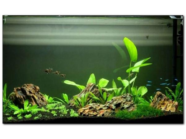 Высаживаем живые растения в аквариум правильно