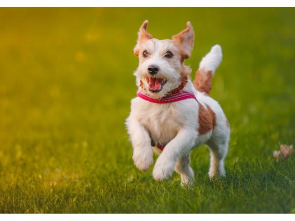 Топ-10 средств от блох и клещей для собак