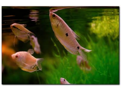 Способы и средства для уменьшения количества нитратов в аквариуме