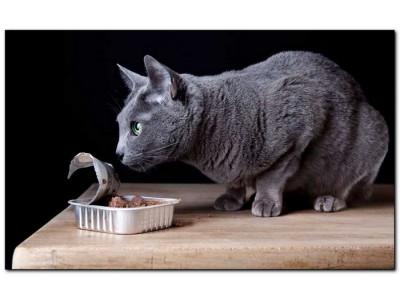 ТОП-10 консервов для кошек: рейтинг лучших, преимущества, рекомендации и как выбрать консервы