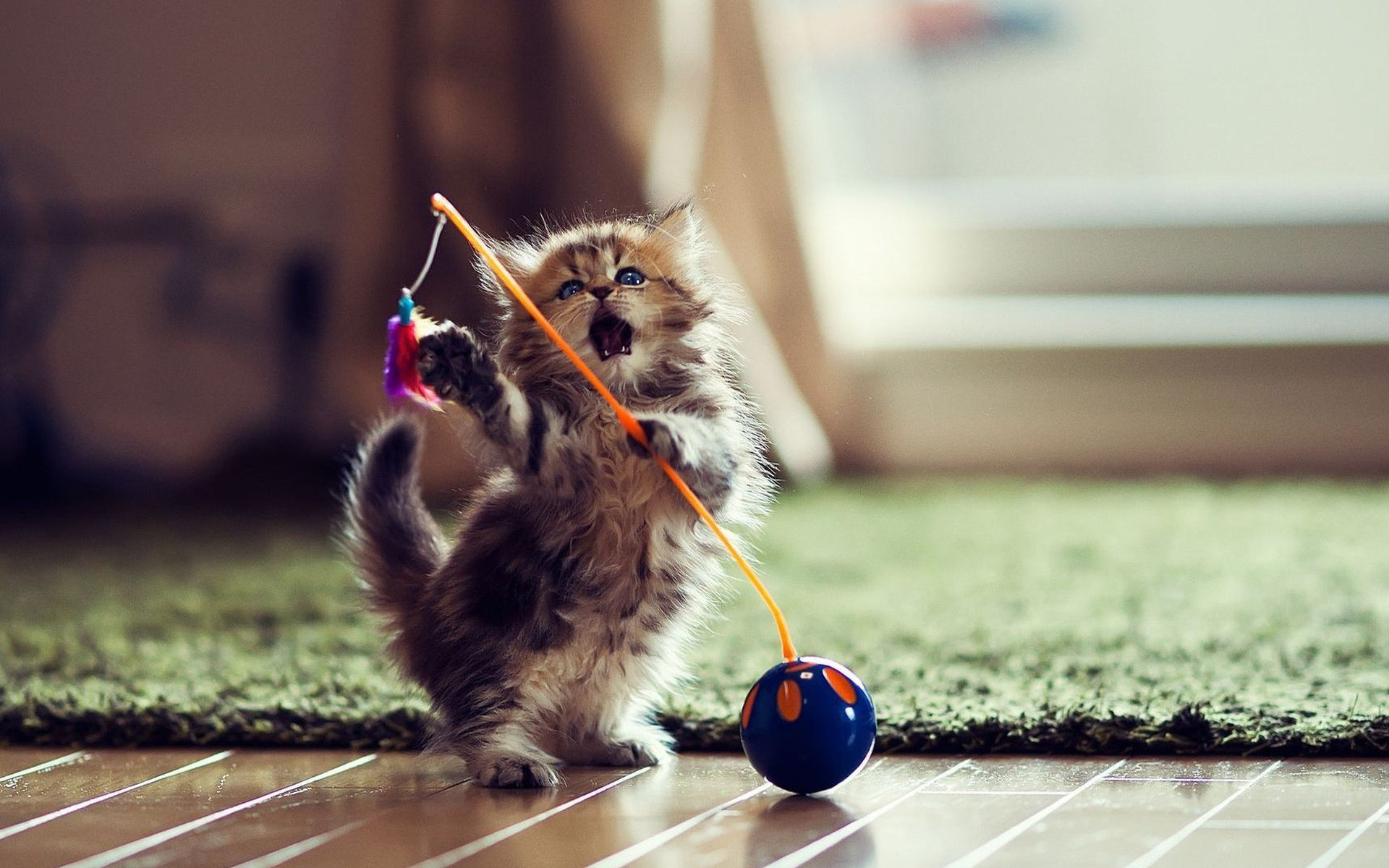 Игрушка на палке для котенка