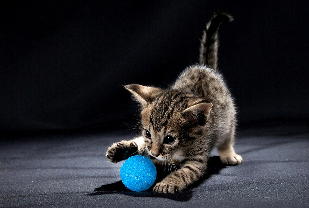 Игрушка мячик для котенка